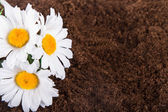 Artificial Flower on Soil — Stock Photo