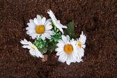 Artificial Flower on Soil — Stock Photo