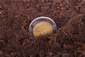 Coin Growing in Soil — 图库照片