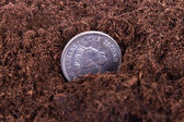 Coin Growing in Soil — Stock Photo