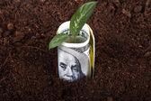 Dollar Bill Growing in Soil — Stok fotoğraf