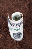 Dollar Bill Growing in Soil — Stock fotografie