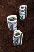 Dollar Bills Growing in Soil — 图库照片