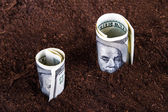 Dollar Bills Growing in Soil — Stock fotografie