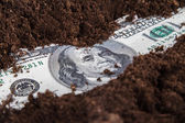 деньги растут в почве — Стоковое фото