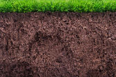 Soil under Grass — Foto de Stock