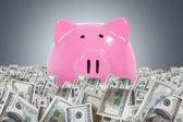Piggy Banks in Dollar Farm — Stock Photo