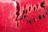 Detal z arbuza — Zdjęcie stockowe