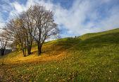 осень, желтые листья, пейзаж, — Стоковое фото