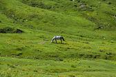 Horse, field, green grass, — Stock Photo