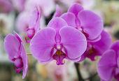 Kwiaty kwitną storczyki — Zdjęcie stockowe