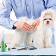 Dog grooming — Foto de Stock