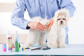 Dog grooming — Stock Photo