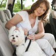 Dog safe in the car — Stockfoto