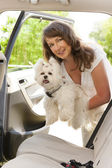 Getting dog into a car — Stock Photo