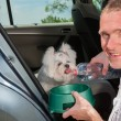 Stock Photo: Dog drinking water