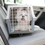 Hund sicher im Auto — Stockfoto