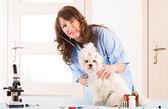 Woman vet holding a dog — Stock Photo