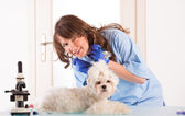 Woman vet with a small dog — Stock Photo