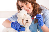 Woman vet holding a dog — Stock Photo