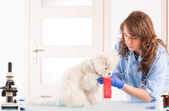 Woman vet with a dog — Stock Photo