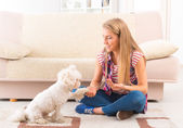 Cute Maltese dog giving a paw — Stock Photo