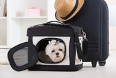 Dog sitting in his transporter — Stock Photo