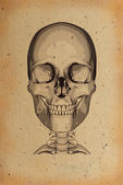 Old skull illustration — Stock Photo