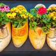 Wooden clogs with blooming flowers — Stock Photo