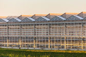 Dutch greenhouse — Stock Photo