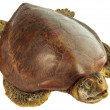 Stuffed dead turtle — Stock Photo