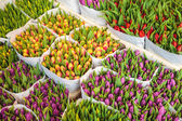 Assortment of colorful tulips — Stock Photo