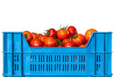 Crate with fresh tomatoes — Foto Stock