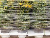 Plastic wrapped plants — Stock Photo