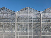 Greenhouse in Netherlands — Stock Photo