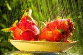 新鲜的火龙果在雨中. — 图库照片