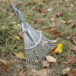 Stock Photo: Rake with leaves