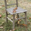 Stock Photo: Old chair in garden