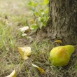 Stock Photo: Pear on grass