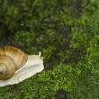 Stock Photo: Snail on moss