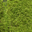 Stock Photo: Moss in fall