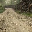 Stock Photo: Rural forest road