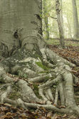 Tree root 1 — Stock Photo