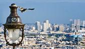 Parisian pigeon — Stock Photo