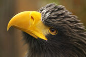 The eagle — Stock Photo
