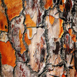 Abstract bark background — Stock Photo