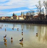 冬季布拉格 — 图库照片