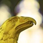 Gold eagle — Stock Photo