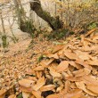 Leaves in the galician forest — Stock Photo