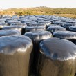 Many wrapped hay bales - Stock Photo